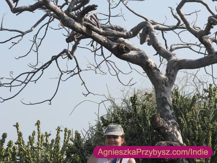 Ajanta-Agnieszka-Przybysz